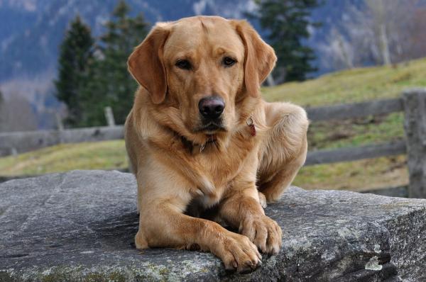 Învățați-L Pe Câinele Meu Să Se Întindă - Criteriul 4: Câinele Dvs. Rămâne Jos O Secundă Chiar Dacă Vă Deplasați