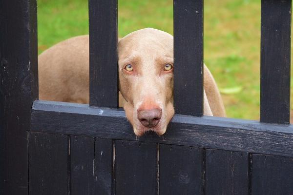 Învățându-Mi Câinele Să Rămână Pus La Comandă - Pași Preliminari