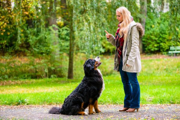 Învățați-L Pe Câinele Meu Să Rămână Pus La Comandă - Exersați În Diferite Situații