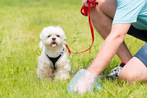 Învățarea Unui Câine Adult Cu Lesa Să Meargă - Prima Plimbare În Afara Casei