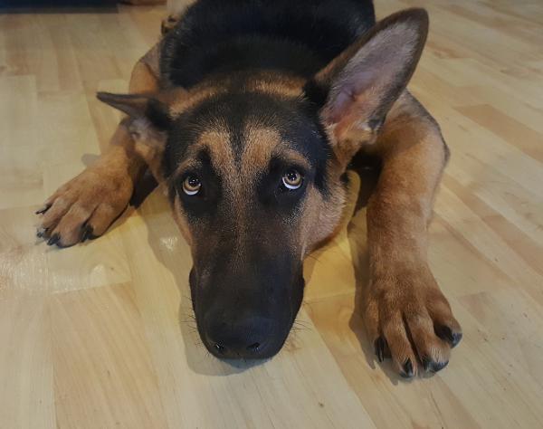 Învățarea Unui Câine Adult Cu Lesa Să Meargă - Ce Să Faci Dacă Câinele Nu Vrea Să Se Miște?