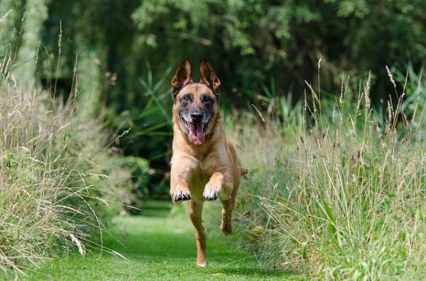 Învățarea Câinelui Să Vină La Apel - Criteriul 5: Câinele Tău Vine Când Suni