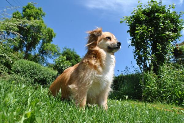 Învățați Câinele Să Vină La Apel - Criteriul 6: Câinele Dvs. Vine Fără O Ordine Formală În Diferite Situații