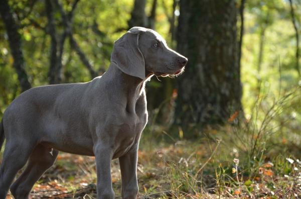 Învățați Câinele Să-I Recunoască Numele - Alegeți Un Nume Potrivit