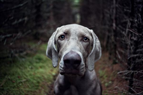 Învățați Câinele Să-I Recunoască Numele - Extindeți Atenția Câinelui