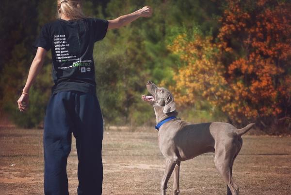 Învățarea Câinelui Să-Și Recunoască Numele - Probleme Posibile Atunci Când Îl Învățați Pe Câine Să-I Recunoască Numele