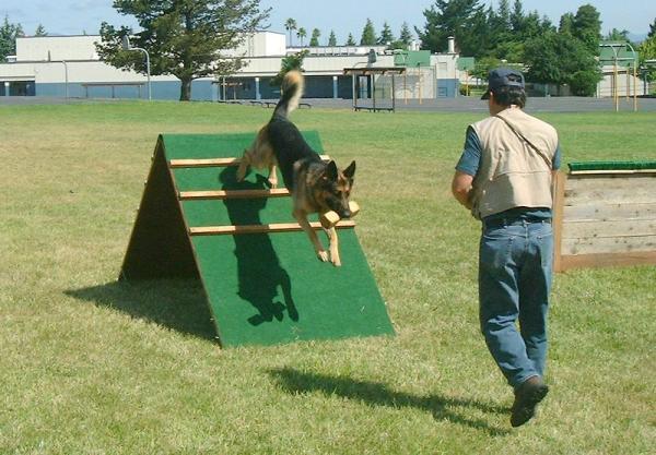 Antrenamentul Câinilor Schutzhund - Fazele Schutzhund