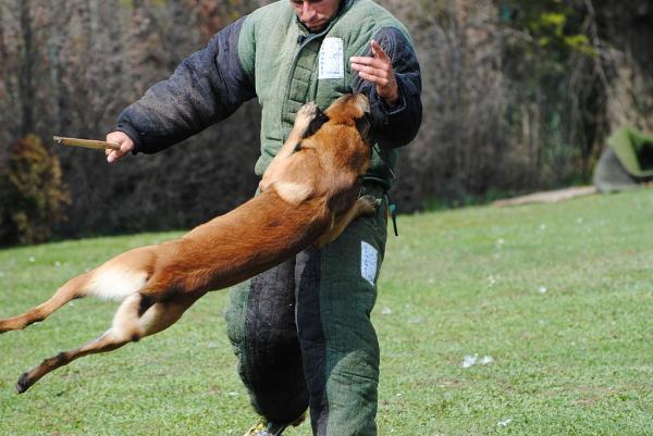 Antrenament Pentru Câini Schutzhund - Observații Despre Schutzhund