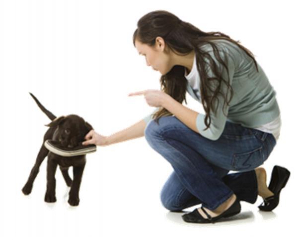 Greșeli Frecvente La Antrenarea Unui Cățeluș - 5. Pedepsirea Și Certarea Câinelui