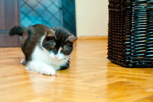 Laserul Este Bun Pentru A Te Juca Cu Pisici? - Jocuri De Vânătoare