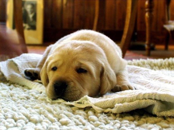 Împiedicați Câinele Meu Să Distrugă Grădina - Ce Să Fac Pentru Ca Câinele Dvs. Să Nu Distrugă Grădina?