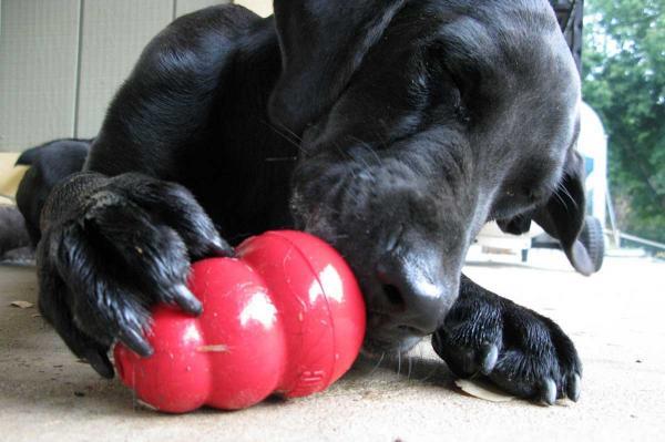 Împiedicați Câinele Meu Să Mestece Lucruri - Împiedicați Cățelușul Să Devină Distructiv