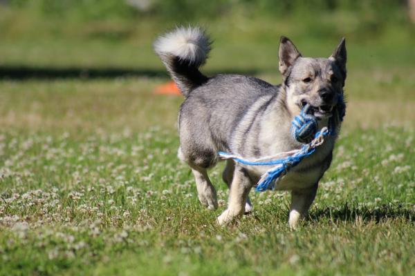 Prevenirea Câinelui Meu De A Mușca Lucruri - Redirecționarea Comportamentului Câinelui Distrugător