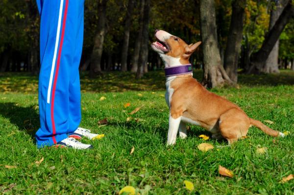 Inițierea Antrenamentului Pentru Câini - Criterii De Antrenament Pentru Câini