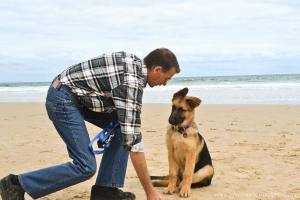 Inițierea La Antrenamentul Câinilor - Probleme La Antrenamentul Câinilor