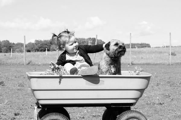 Câinele Meu Este Gelos Pe Copil, Ce Fac? - Înainte De Sosirea Bebelușului