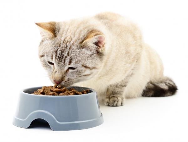 Ce Trebuie Să Fac Dacă Pisica Mea Este Stresată - Ai Grijă De Dieta Pisicii Tale