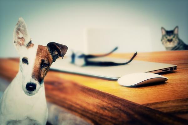 Ce Trebuie Să Fac Dacă Pisica Mea Este Stresată - Observați Celelalte Animale Din Casă