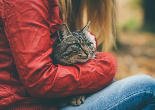Ce Să Fac Dacă Pisica Mea Este Stresată - Petreceți Timp Cu Pisica Dvs.