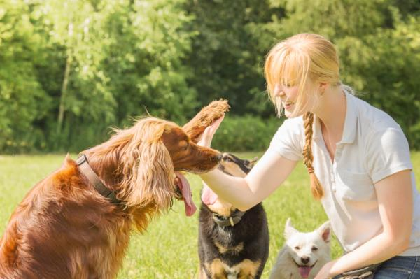 Tehnici De Antrenament Pentru Câini - Tehnici Bazate Pe Etologia Canină