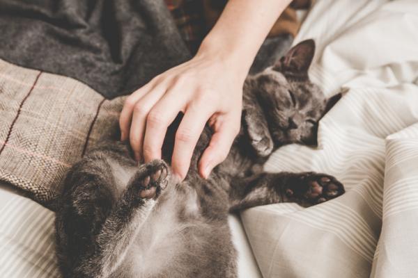 Soluții Pentru Ca Pisica Mea Să Nu Zgârie Canapeaua - Nu-L Certați, Recompensați Întotdeauna Comportamentul Bun