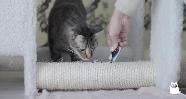 Soluții Pentru Ca Pisica Mea Să Nu Zgârie Canapeaua - Scratchers, Cei Mai Buni Aliați Ai Tăi