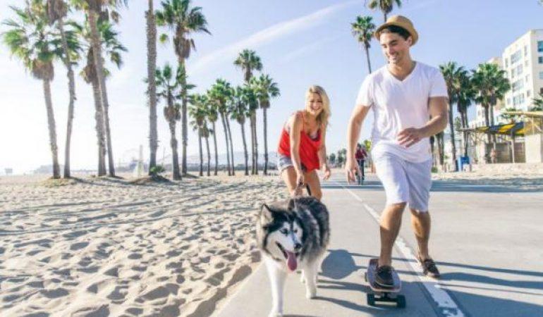 10 motive pentru a vă plimba câinele