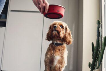De câte calorii are nevoie câinele pe zi