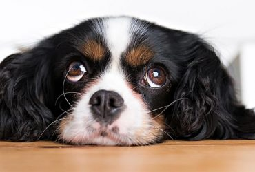 Ce pot face pentru a-mi opri câinele să latre?