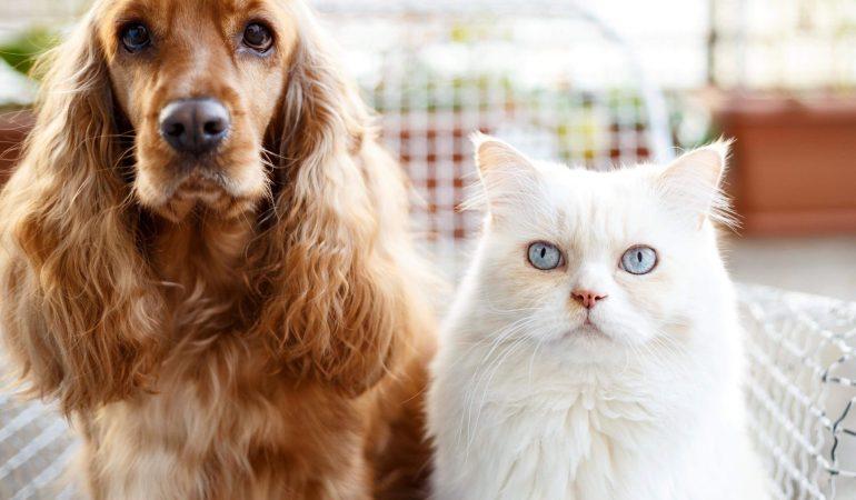 Dreseaza câinele să nu umble in litiera pisicii