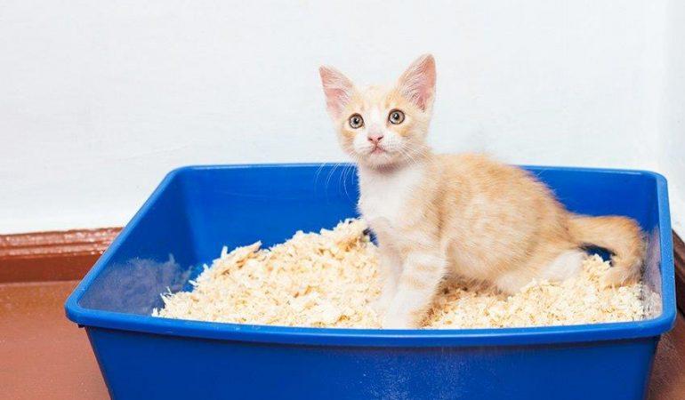 Litiera pisicii – Cum se curata?
