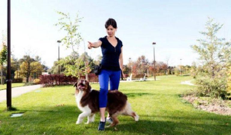 Echipament dresaj pentru câini