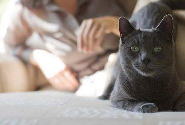 Schimbarea hranei pisicii