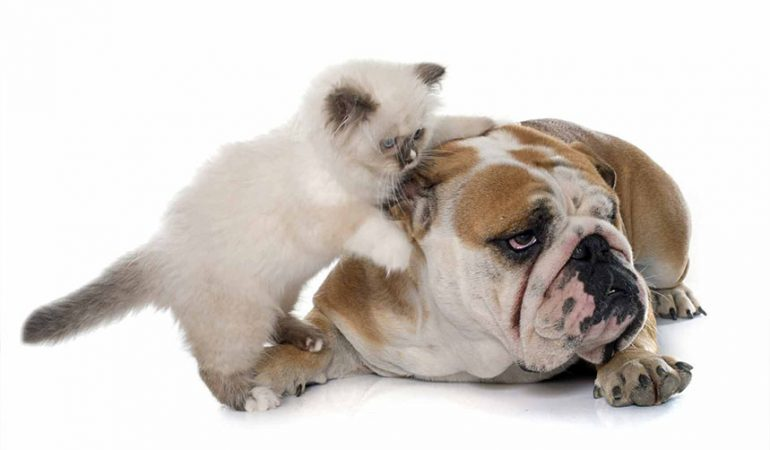 Exista înțelegere între câine și pisică ?