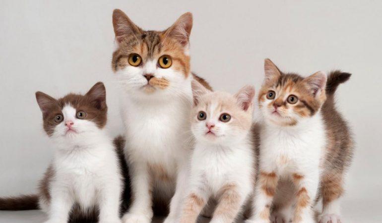 Zece lucruri despre adoptia unei pisici