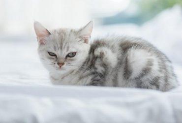 Educatia pisicii, cum să-ți faci pisica să te asculte