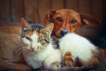 Cum să faci o pisică să accepte un câine?
