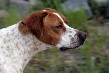 12 tipuri de agresivitate canină