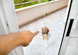 15 greșeli la dresajul unui câine