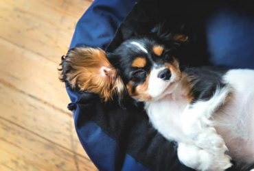 Cum să obosiți un câine?