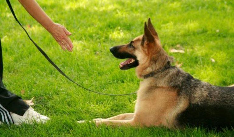 Cum ar trebui să fie o sesiune de dresaj pentru câini?