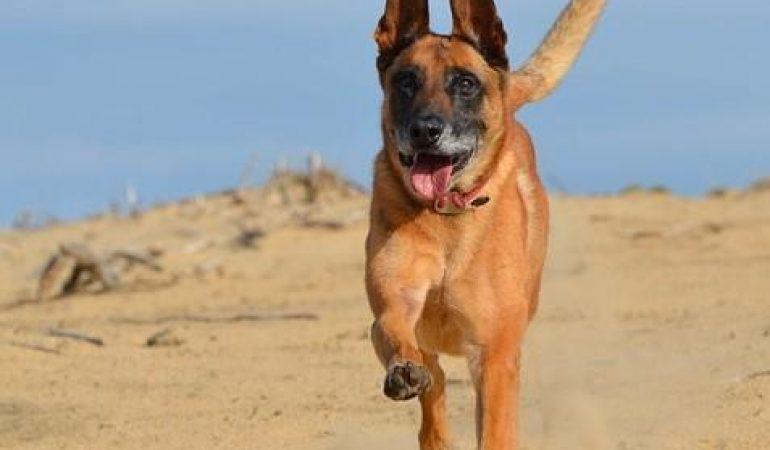 Exerciții pentru câini hiperactivi