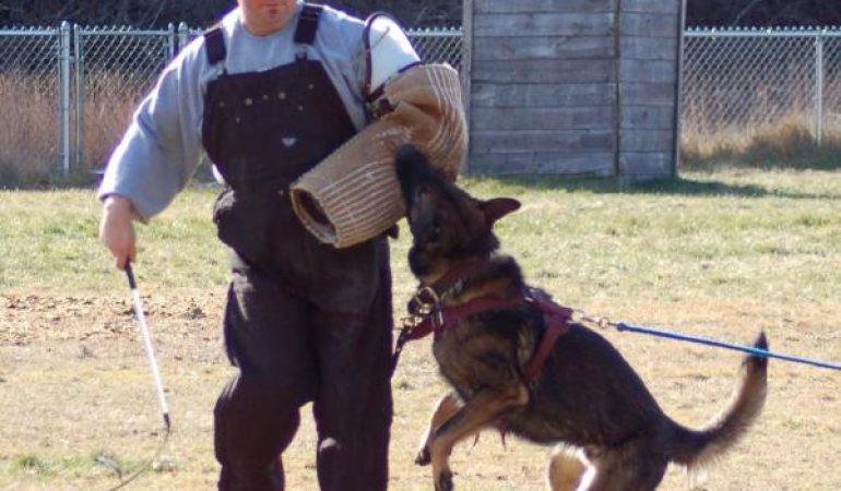 Dresaj câini Schutzhund