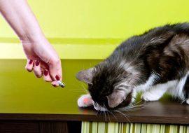 Laserul: bun pentru a te juca cu pisica?