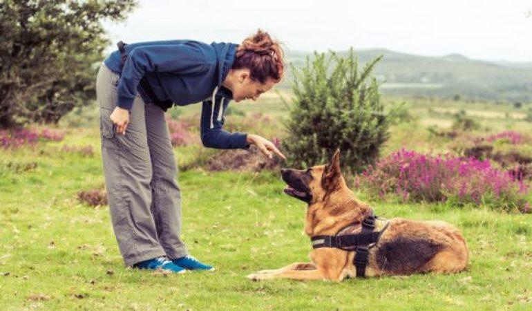 Inițierea la dresajul câinilor
