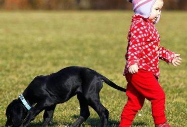 Câinele este gelos pe copil, ce fac?