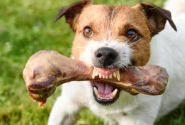 De ce câinele mârâie la mine când mănâncă?