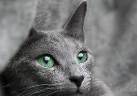 Pisica stresata – tratament