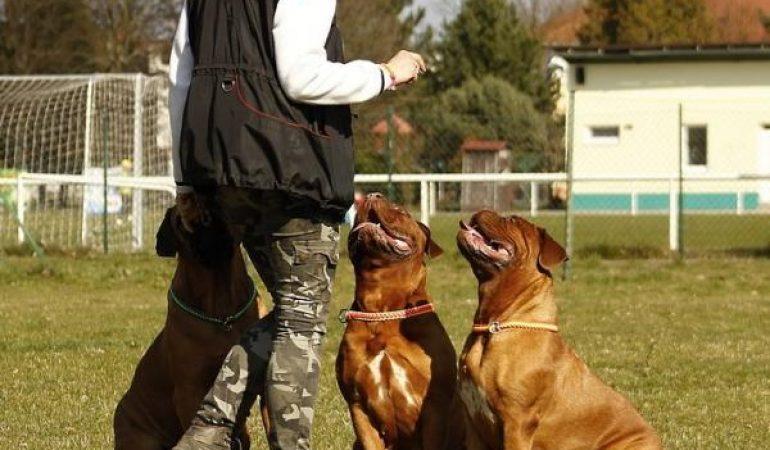 Tehnici de antrenament pentru câini