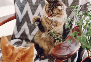 Pisicile sunt geloase?  – Cauze, comportament și ce să faci!